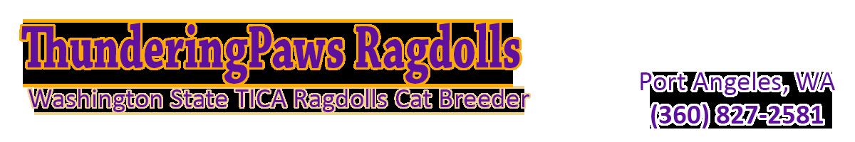cat groomer seattle